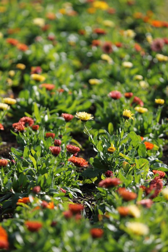 冬でも花壇は頑張ってます