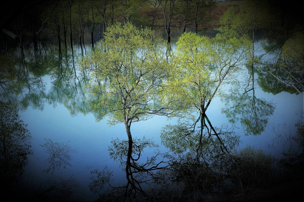 白川ダム湖
