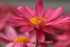 可憐で清楚な花 マーガレット