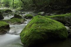 大きな苔岩