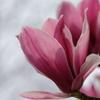 東山植物園の花々12