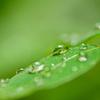 雨の置き土産