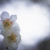 徳川園3月の花めぐり06