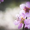 徳川園3月の花めぐり009