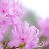 東山植物園の花々13