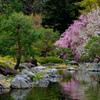 白鳥庭園の桜02