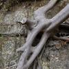 木の根の造形