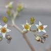 サボテンの小さな花