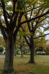 紅葉の始まった公園