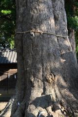 五霊神社の御神木
