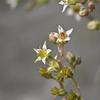 グランパラリーフの花
