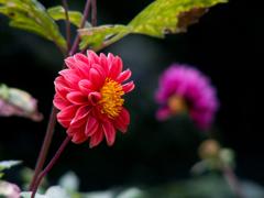 蘆花公園の花