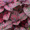複雑な模様の葉
