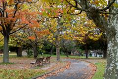 小さな公園の紅葉