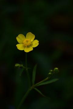 メタリックな黄色