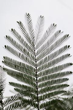 面としての植物