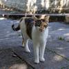沖縄シリーズ6・希望ヶ丘公園の猫さん達5