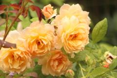 織姫に花束を