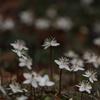 六甲山の春