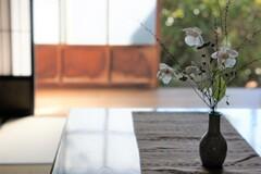 秋明菊と和む
