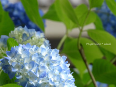 植物の 葉の隙間から 悠久の 風がすり抜け 花は揺れつつ