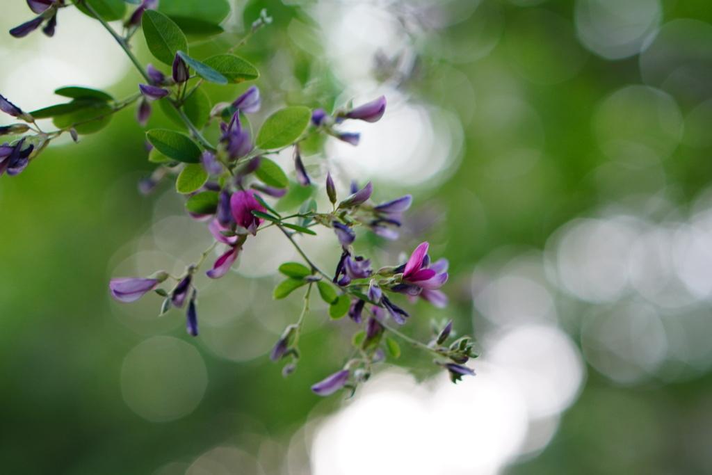 萩とフィトンチッドの香り