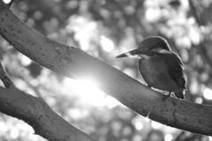 木漏れ日と翡翠