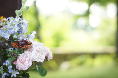 campanula alpen blue & rose