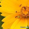チョッカイ蟻と監視蟻
