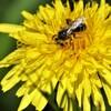 花粉を付けて
