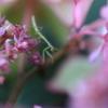 紫陽花の花の上で