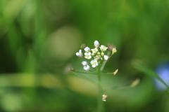 野の花1輪