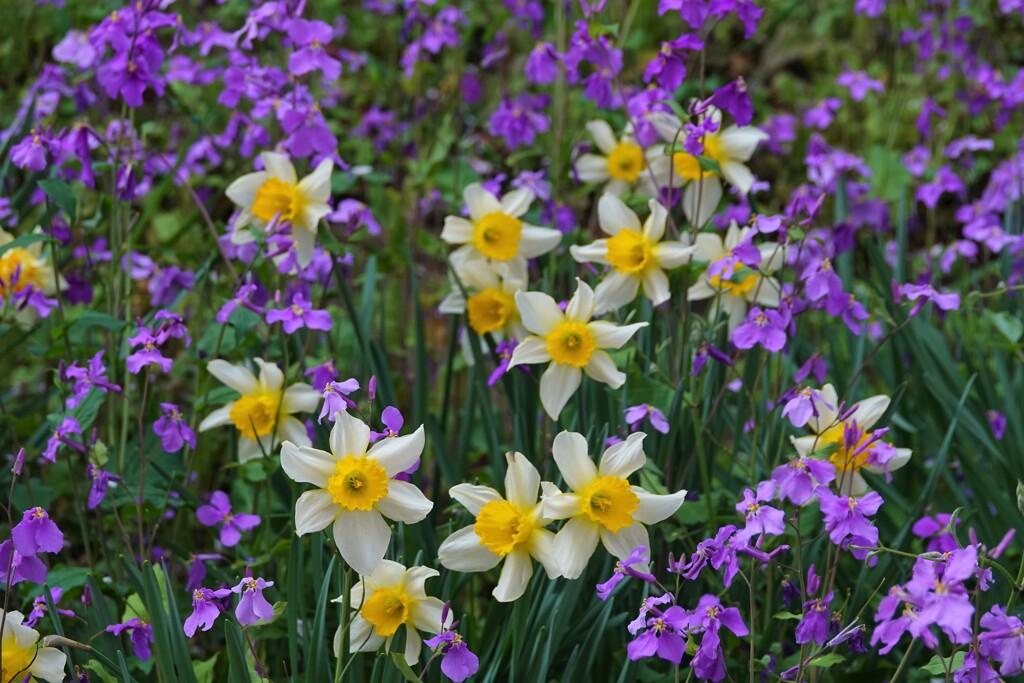 野に咲いた花
