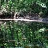 沼の映り込み