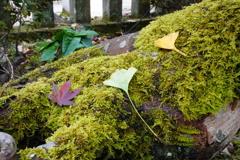 苔に落ちた枯れ葉
