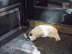 通りの秘蔵っ子の微睡み~~