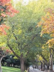 プレリュード~ 染まる秋色へ~