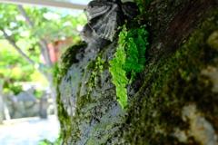 須磨寺散歩