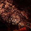 行こうよ夜桜