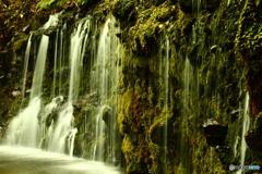 滝に潜むクマさん 千条の滝