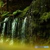 岩苔に落ちる滝 箱根千条の滝