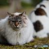 公園猫59