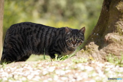公園猫99