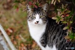 公園猫44