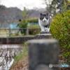 公園猫60