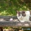 猫とベンチと木洩れ陽と。