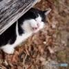 公園猫49