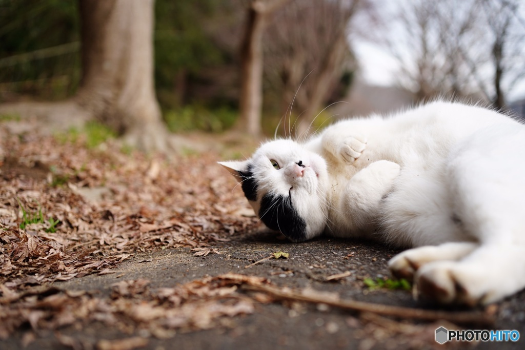公園猫40