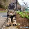 公園猫81
