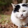 公園猫48